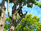 Sectional Dismantling - Tree limb removal
