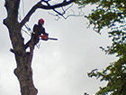 Sectional Dismantling - High tree limb removal