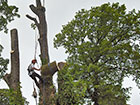 Lowering a large section of trunk