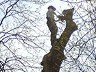Tree Surgeon Inspection